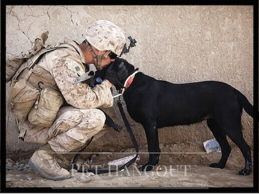 Military dog and his handler