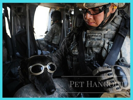 Military dog getting ready to jump out of plane