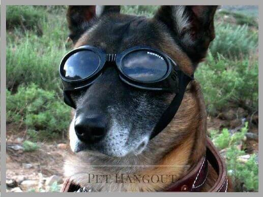 Military dog in goggles