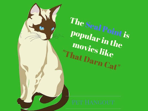 Seal point Siamese are popular in movies