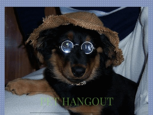Dog with beatles glasses and hat