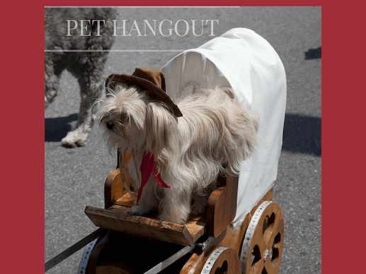 Cute dog with hat riding on a wagon