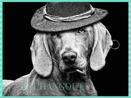 Cool gray dog wearing a hat