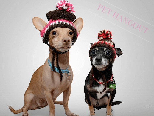 Dogs with knit hats