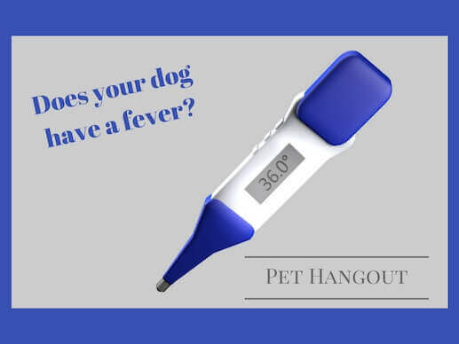 Does your dog have a fever?
