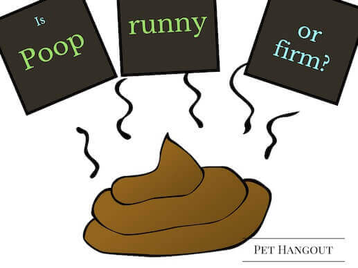 Is your dog's poop runny or firm?