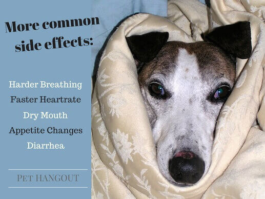 There are some common side effects of giving Benadryl to your dog.