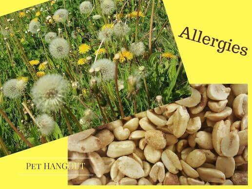 Dandelions or peanuts can cause dog allergies