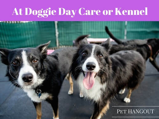 Your dog may be anxious at doggie day care or the kennel