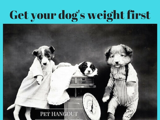 Always know your dog's weight for giving them the correct dose of medicine.