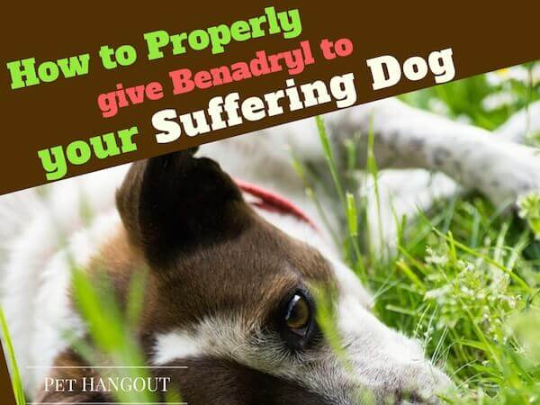 Is It Good To Give Your Dog Benadryl