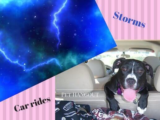 Storms or car rides can produce anxiety in your dog