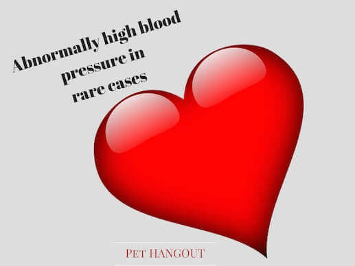 Benadryl can cause high blood pressure in your dog