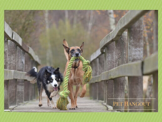 Best buddies walking across bridge with a rope toy