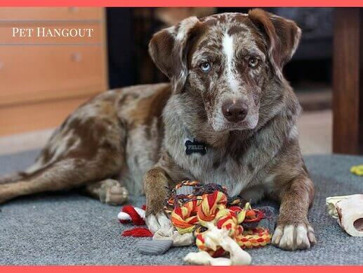 Dog guarding his rope toy
