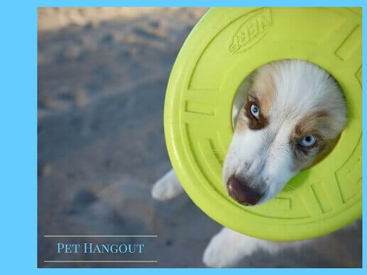 Dog with a frisbee ring around his face