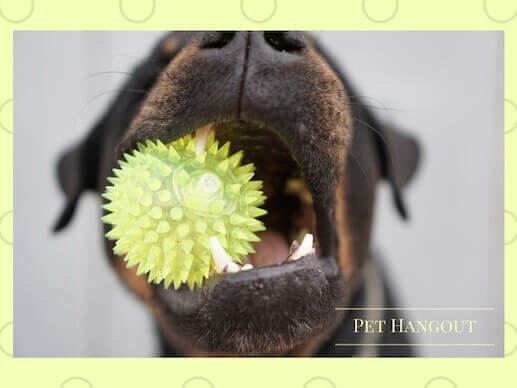 Dog with yellow spike ball in his mouth
