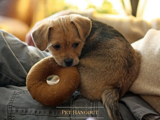 Puppy biting his donut toy