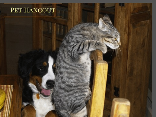 The cat's motto is always make it look like the dog did it.