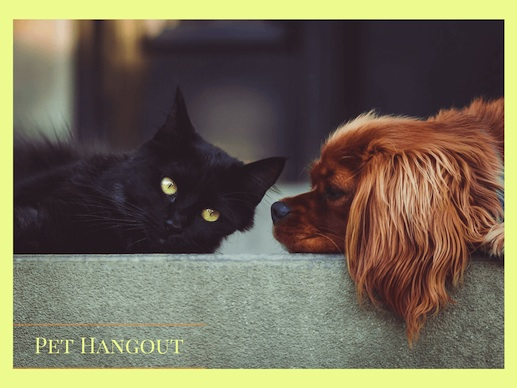 Dogs come running when you call; cats take a message