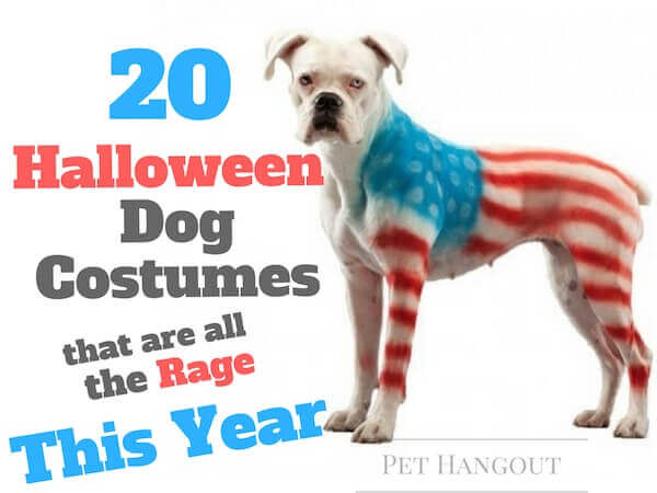 20 Halloween Dog Costumes That Are All The Rage