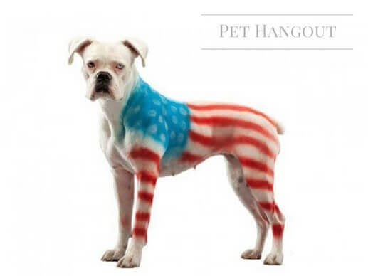 White doggie with a American Flag painted on him.