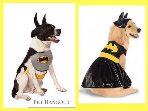 Batman and Batgirl dog costumes to save the world