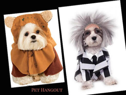 Ewok and Beetlejuice dog costumes are too cute