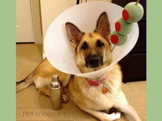 Dress your dog up like a yummy martini.