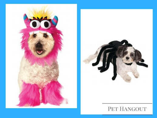 Cute puppies in their Pink Monster and Black Spider Dog Costumes