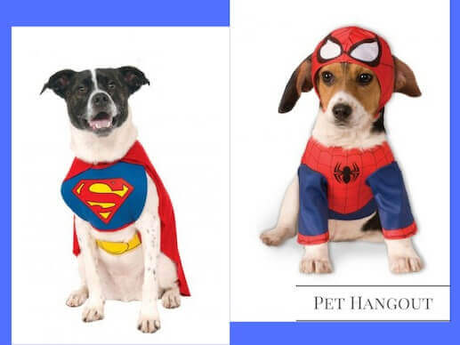 Cute dogs in their spider man and superman dog costumes