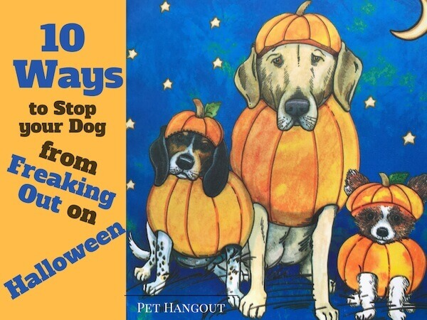 Ten ways to stop your dog from freaking out on Halloween