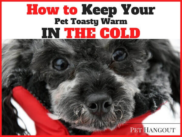 Post on how to keep your pet warm during the cold months