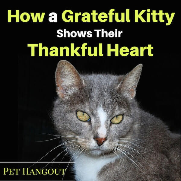 How a Grateful Kitty shows their thankful heart.