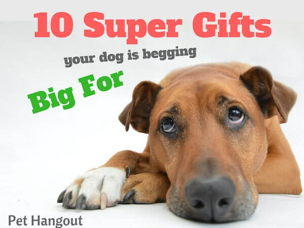 10 Super gifts your dog is begging for