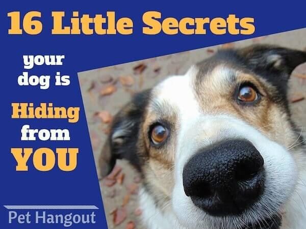 16 little secrets your dog is hiding from you