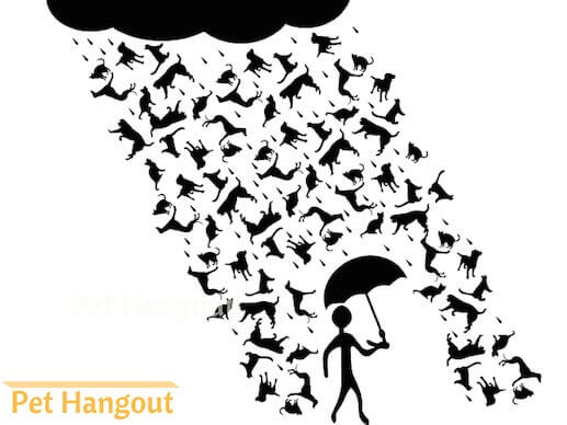 The term raining cats and dogs originated from 17th century England