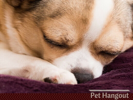 A sleeping dog could be having a dream about you