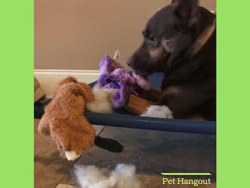 Dogs love to pull all of the stuffing out of their toys