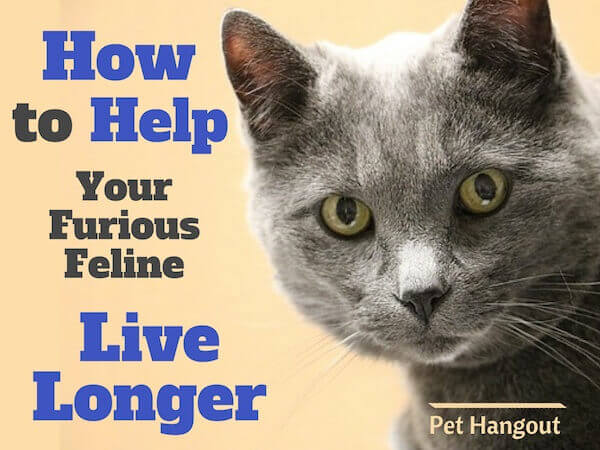 How to help your furious feline live longer