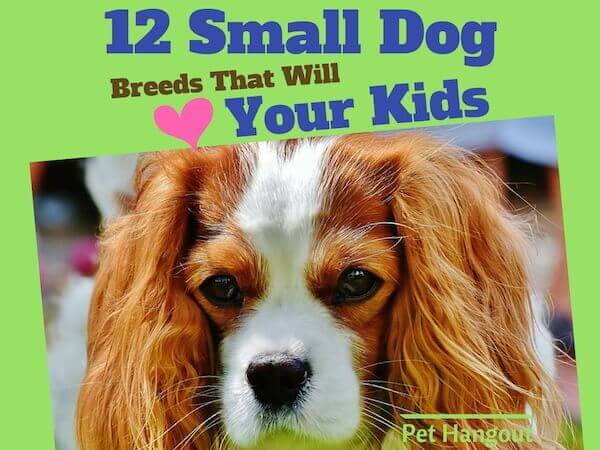 12 small dog breeds that will love your kids