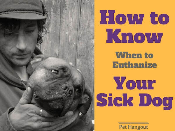 How to know when to euthanize your sick dog.