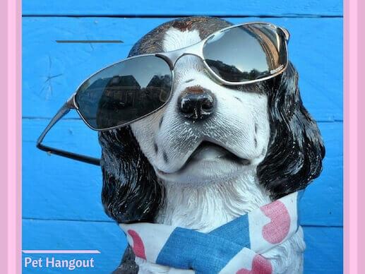 Dog wearing heart bandana and sunglasses.