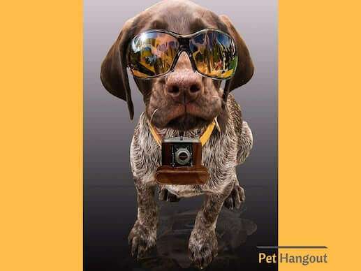 Dog wearing camera and glasses.
