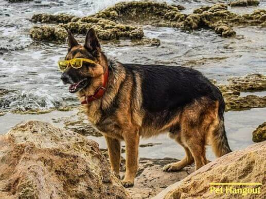 Shepherd by the sea with yellow glasses