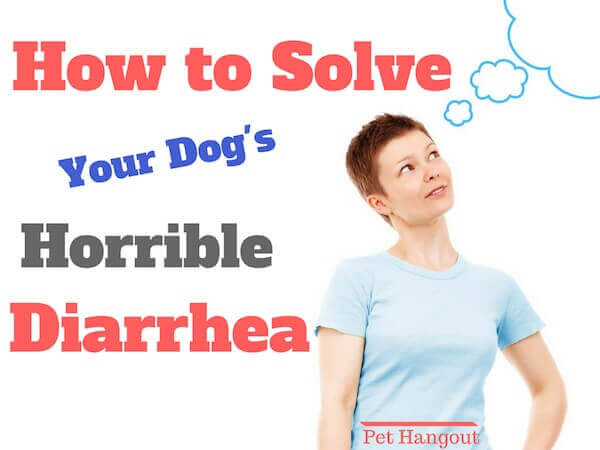 How to solve your dog's terrible diarrhea