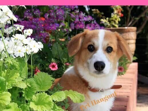 Dog sitting among the flowers