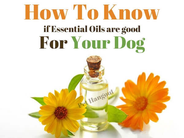 How to know if essential oils are good for your dog.