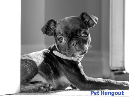 Monochrome puppy pic.