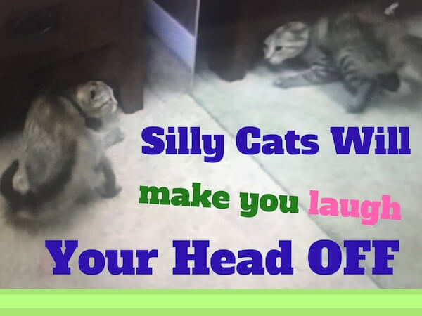 Silly cats will make you laugh your head off.